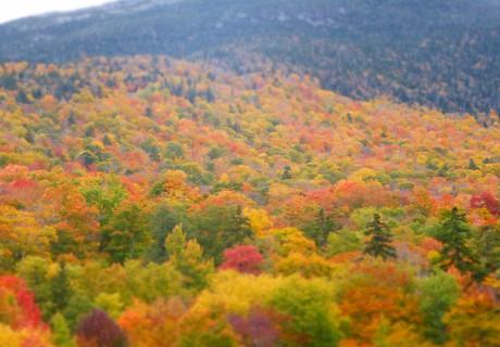 FREE Tree Planting Service